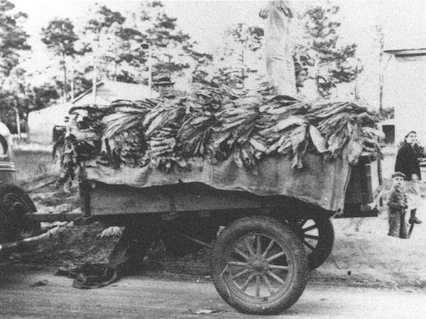 Tobacco harvests on a truck